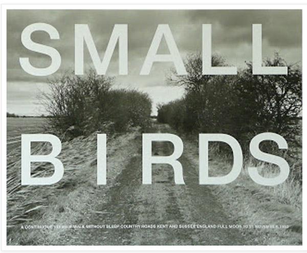 small_bird